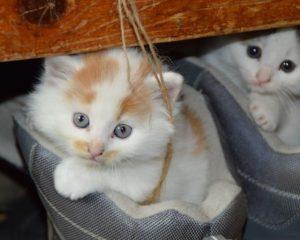 Škrabadla pro kočky si zaslouží koťata i kočičí veteráni