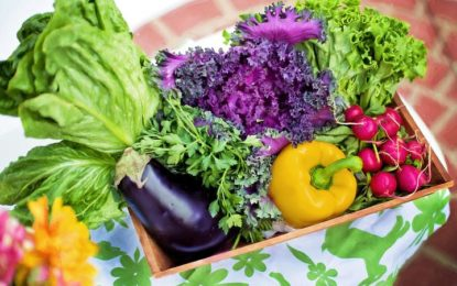 Raw stravování je jízdou na zelené vlně