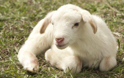 Otázky kolem veganství
