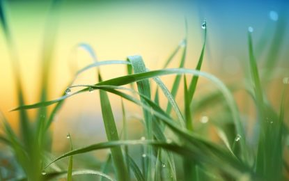 Aerifikace trávníku pro zlepšení přístupu vzduchu a vody