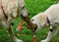 Hygiena – nedílná součástí péče o psa
