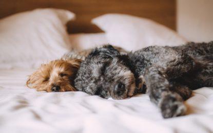 Vybíráme pelechy pro psí mazlíčky. Pro jaký pelíšek se rozhodnete vy?